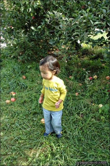 Apple Picking @ Masker Orchard