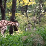 Bronx Zoo in October
