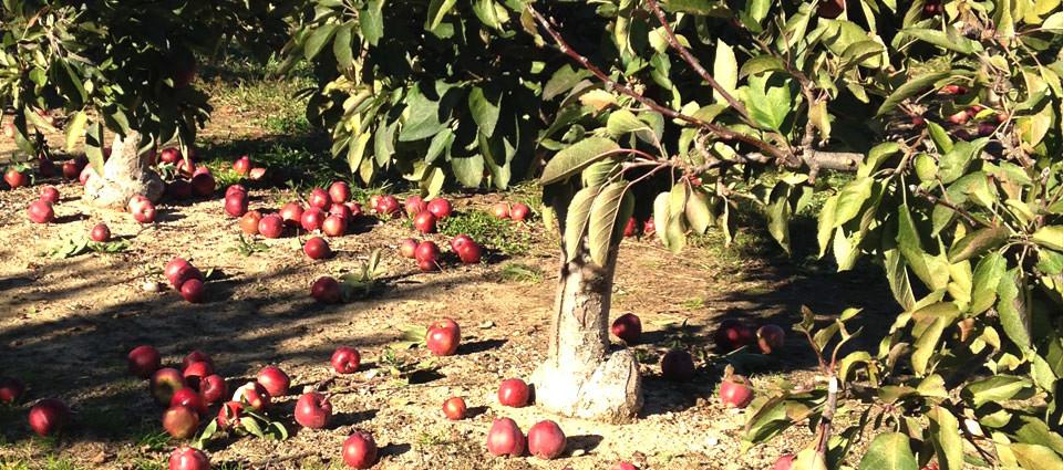 slide-orchard