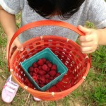 Berry Picking + Corn Festival