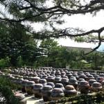 Korea 2014: 서일농원