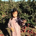 Quickest Apple Picking Ever