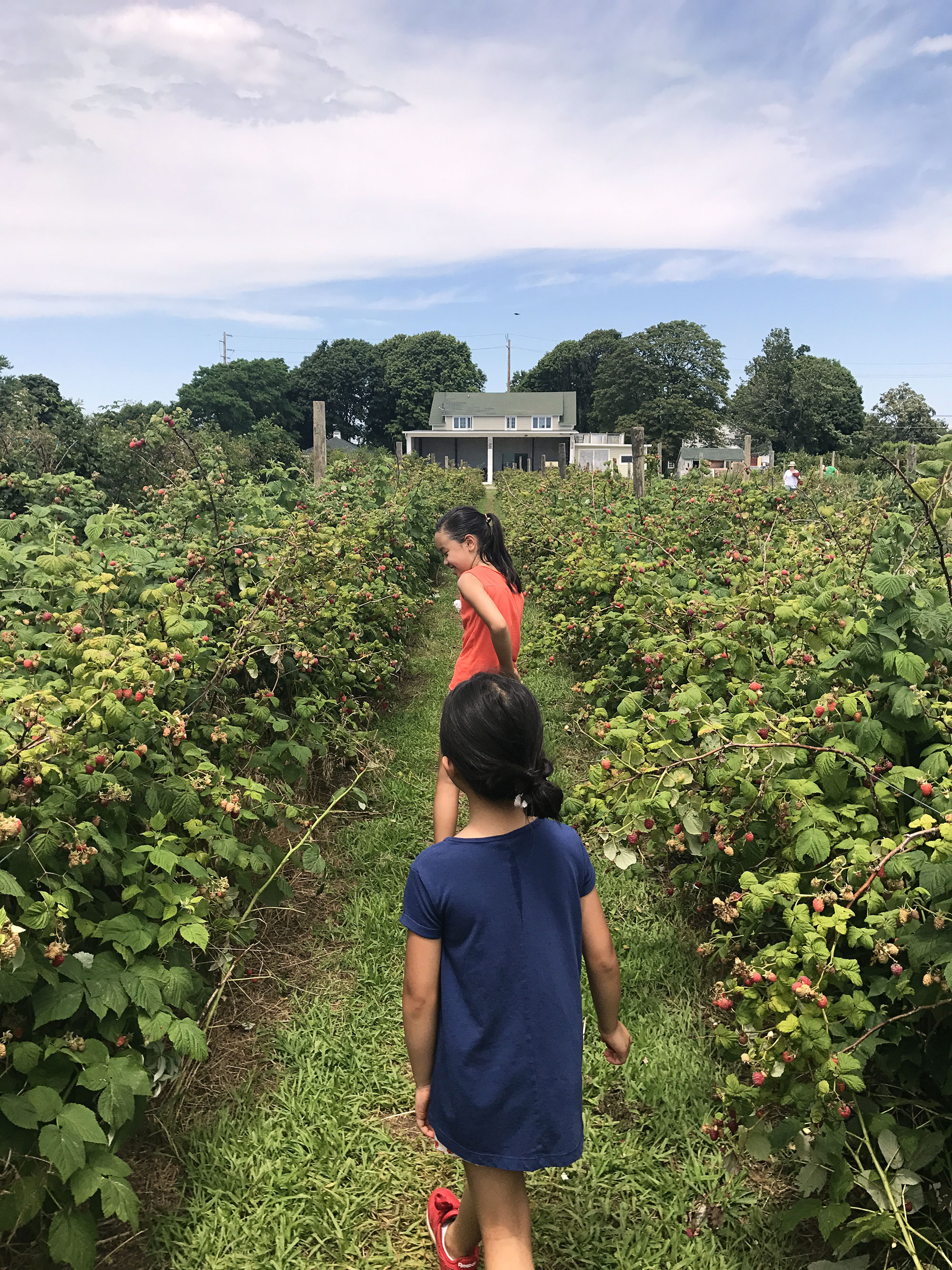 berrypicking2017-2