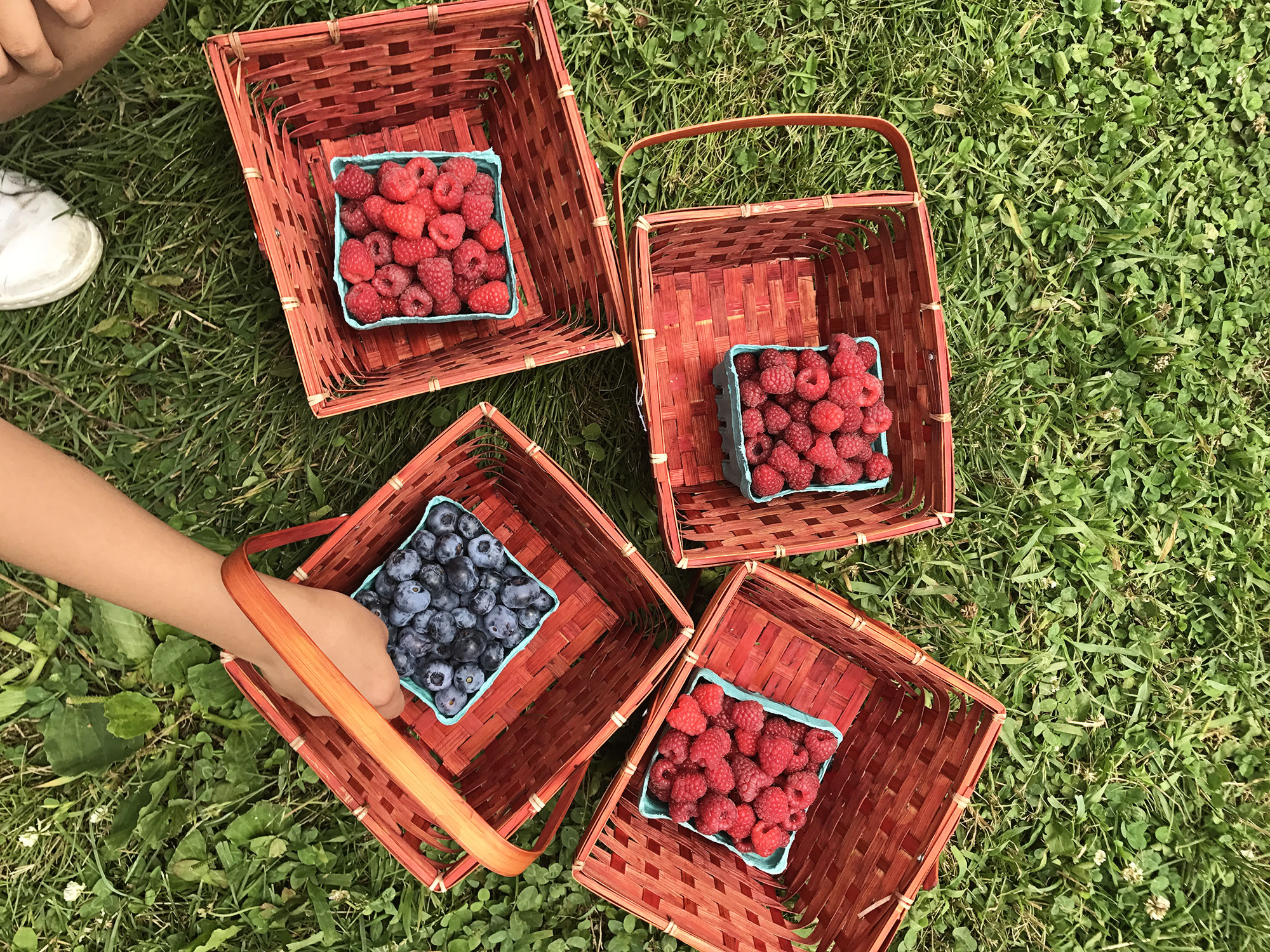 berrypicking2017-3